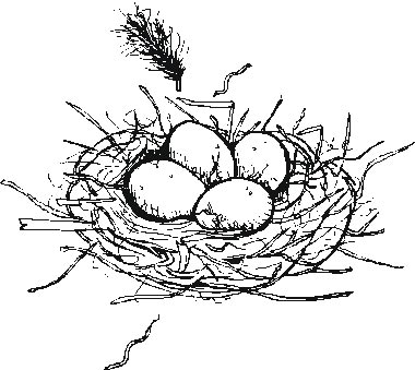 bird eggs coloring pages - photo#8